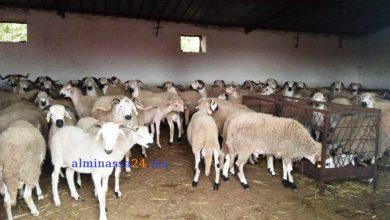 Photo of ضبط مخالفات تخص استخدام فضلات الدجاج في تسمين المواشي