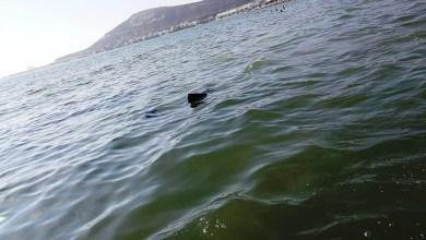 Photo of زيوت مسمومة تطفو فوق مياه شاطئ أكادير تثير ذعر المصطافين وغضب أنصار البيئة