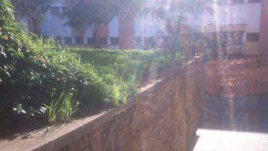 Photo of المغرب غائب في ترتيب عالمي للجامعات الصديقة للبيئة