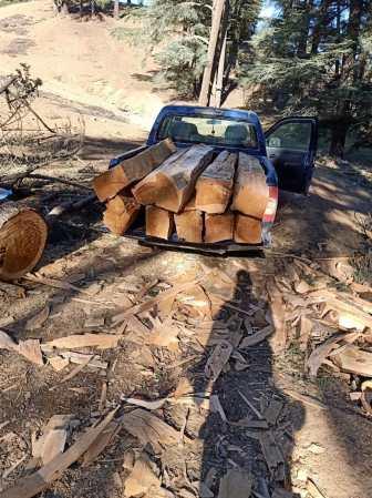 روافد خشبية لشجر الأرز