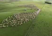 "Photo of ""الفاو"": هناك تسارع في الطلب على منتجات الثروة الحيوانية"