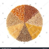stock-photo-cereals-maize-wheat-barley-millet-rye-rice-and-oats-80977438