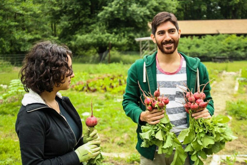 Camp Counsellors tending the vegetable garden at Camp Ballibay Performing Arts Camp in Pennsylvania, USA
