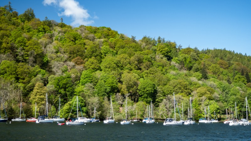 Group of sailboats next to an island on Lake Windermere in Bowness-On-Windermere in the Lake District, UK