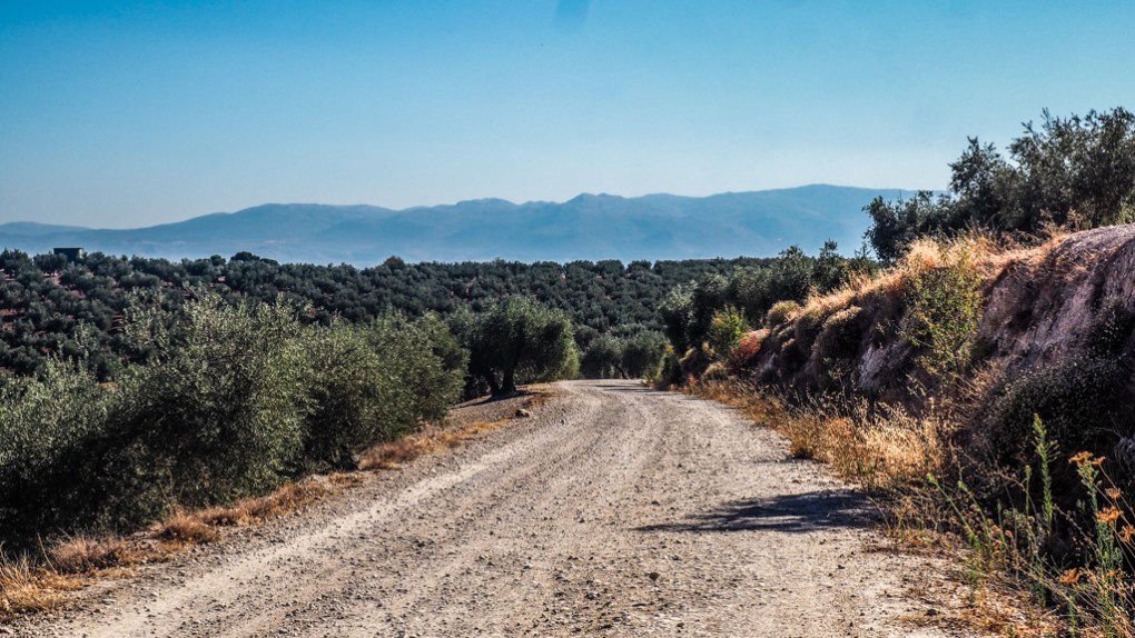 Country road through olive groves in Granada, Spain