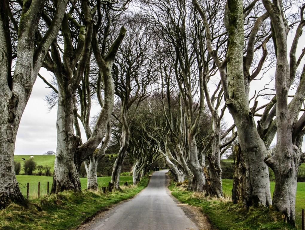 Famous Movie Location Dark Hedges in Northern Ireland