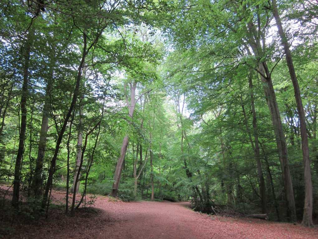Burnham Beeches in Slough, Buckinghamshire in England