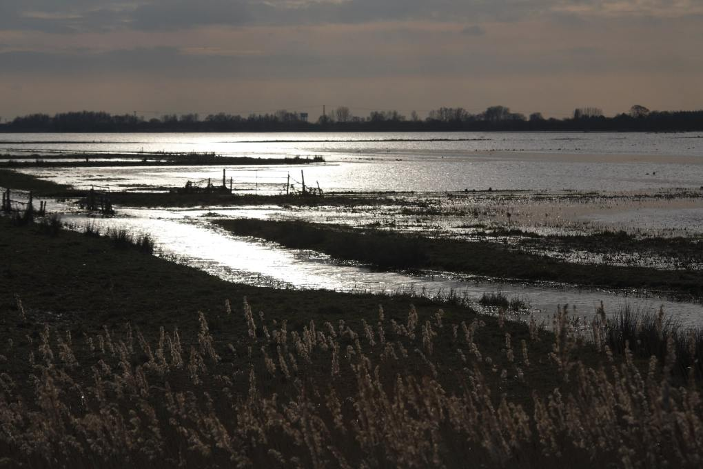 Ouse Washes Nature Reserve in Peterborough, England