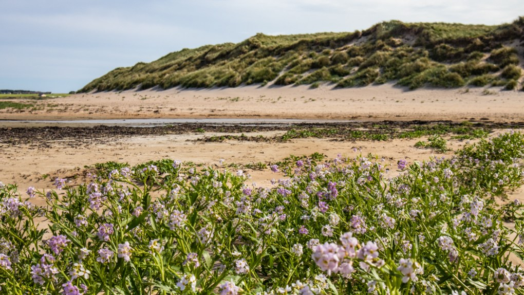 Dunnet Beach on the North Coast 500 in Scotland