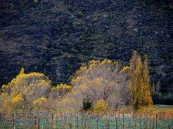 central otago in autumn