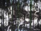 reeds in lake, Dunkeld