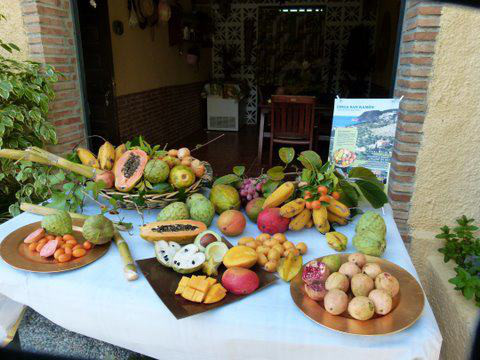 Finca San Ramon - Photo of their fruit