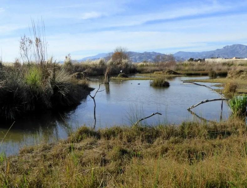 wetlands and wildlife