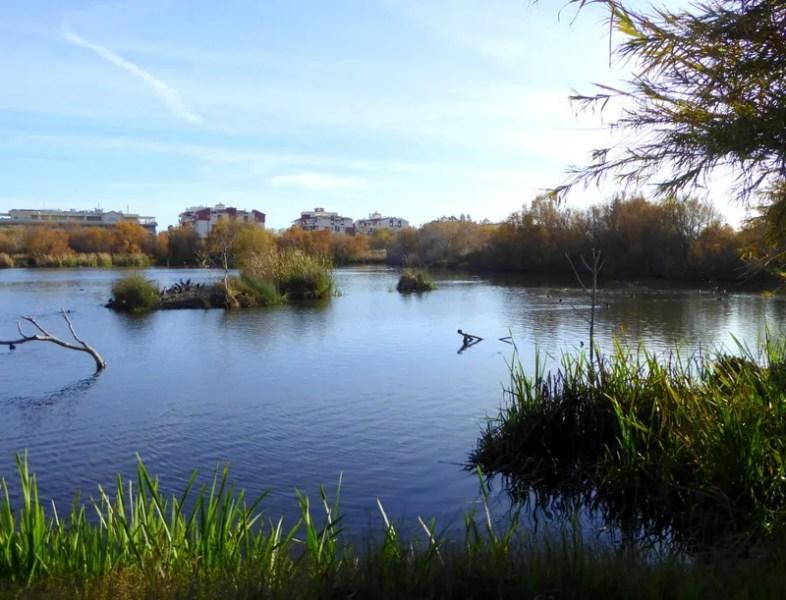 Charca de Suárez wetlands