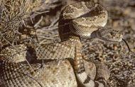 كيف نجا أمريكي من الثعابين بعدما بقي معها داخل حفرة عميقة ليومين؟