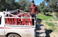 بالصور.. جني اكثر من ١٠٠ الف طن من الزيتون في نينوى