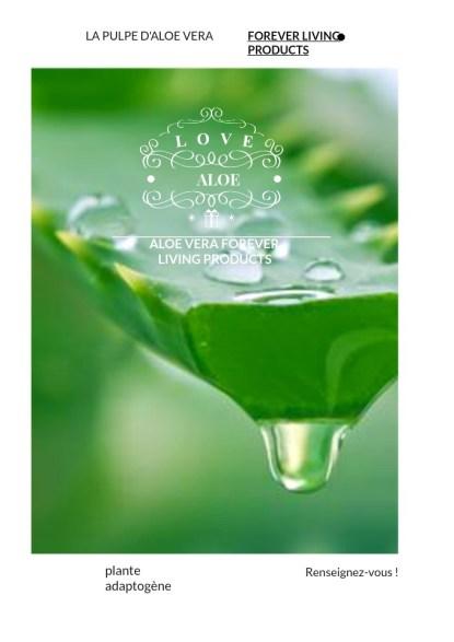 Aloe Vera Plante Adaptogène