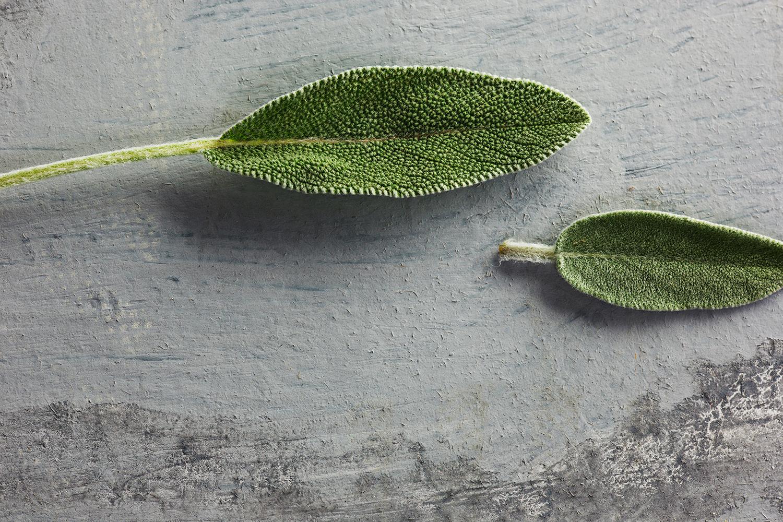 Sauge plante médicinale