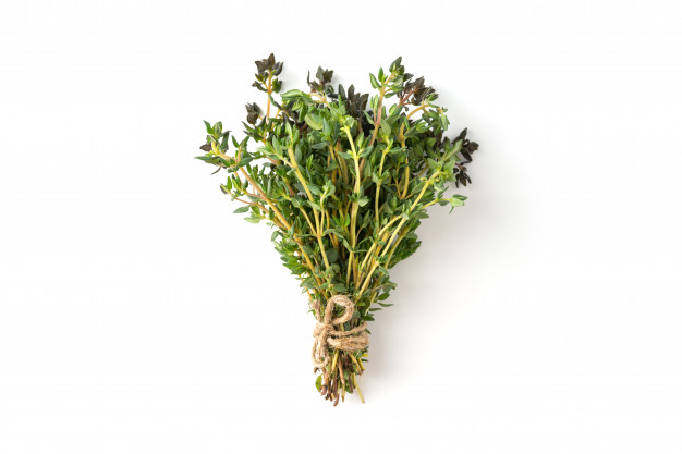 thym plante médicinale