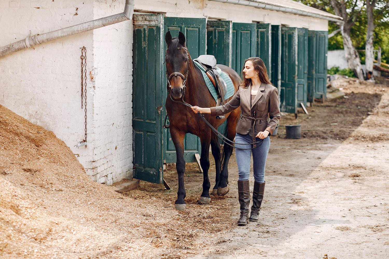 aloe vera pour chevaux en box