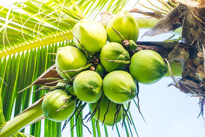 Shampoing sans sulfate aux acides gras de noix de coco