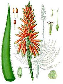Aloe dijelovi