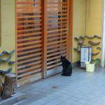 別府で猫をよく見かける理由とは?[別府あるある]