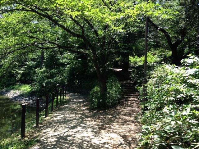 大宮公園(遊歩道2)
