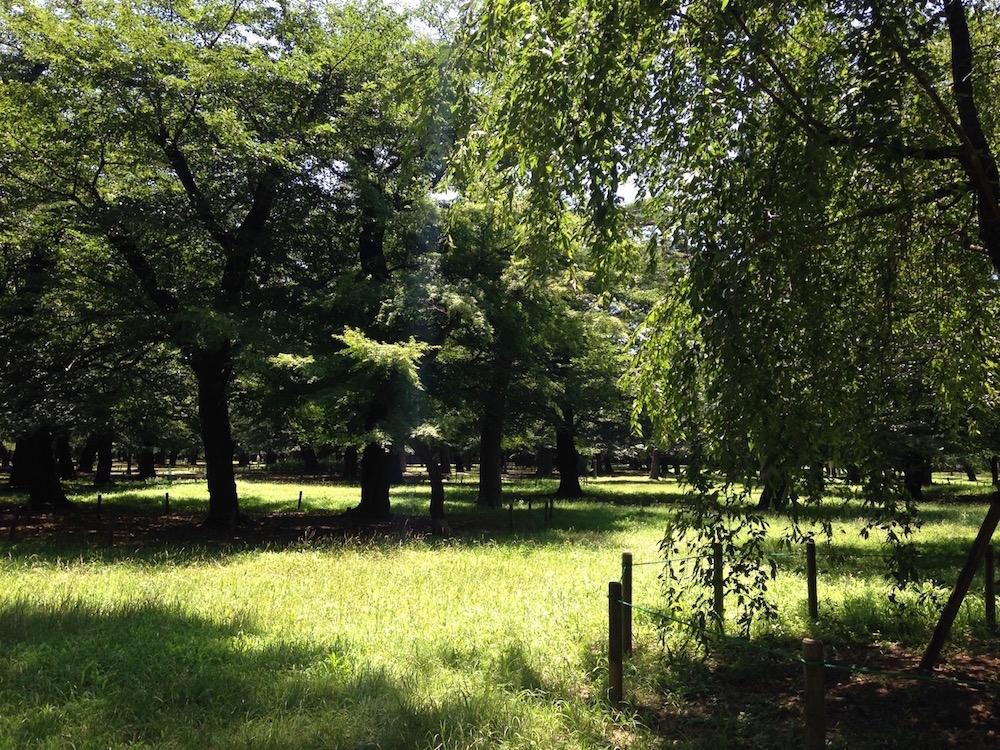 大宮公園(樹木)