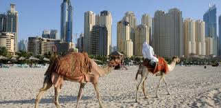 camel in the city