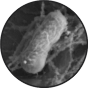 Novaerus醫療級等離子空氣消毒空氣淨化之前正常大腸桿菌E.coli _ NASA Ames research center_Alohamedicalhk