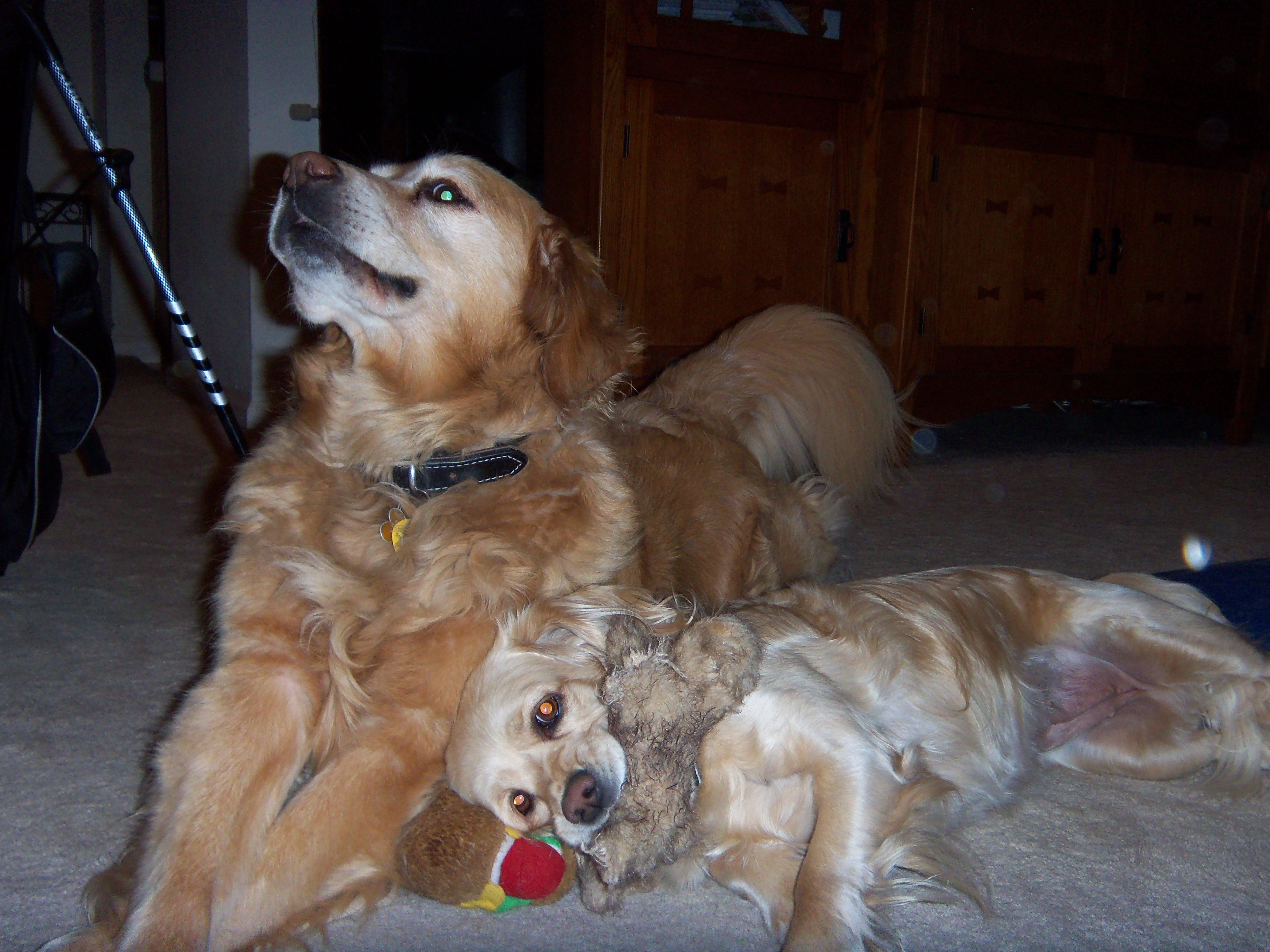 dog-boarding-blondie