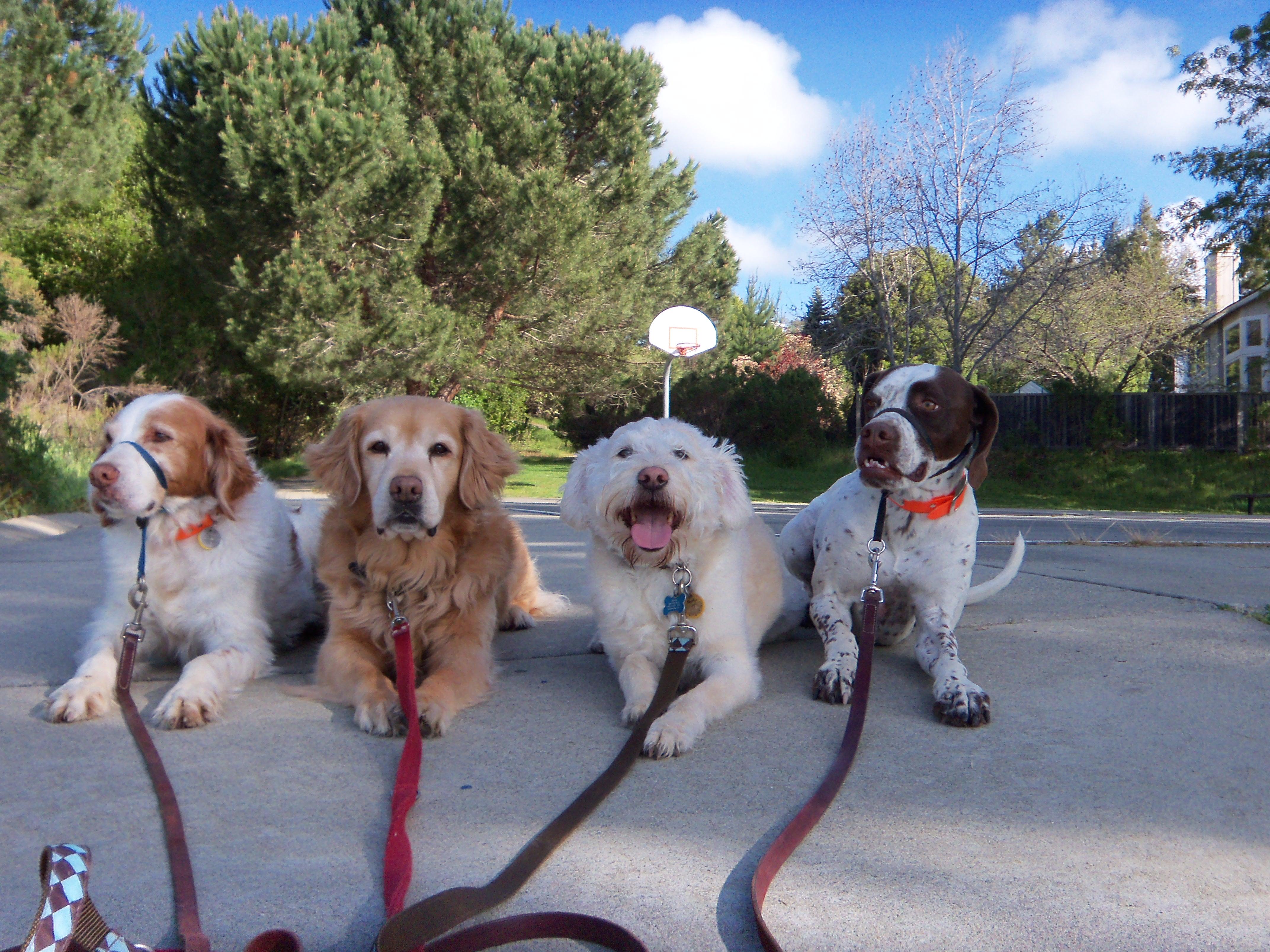 dog-walking-4-group-1