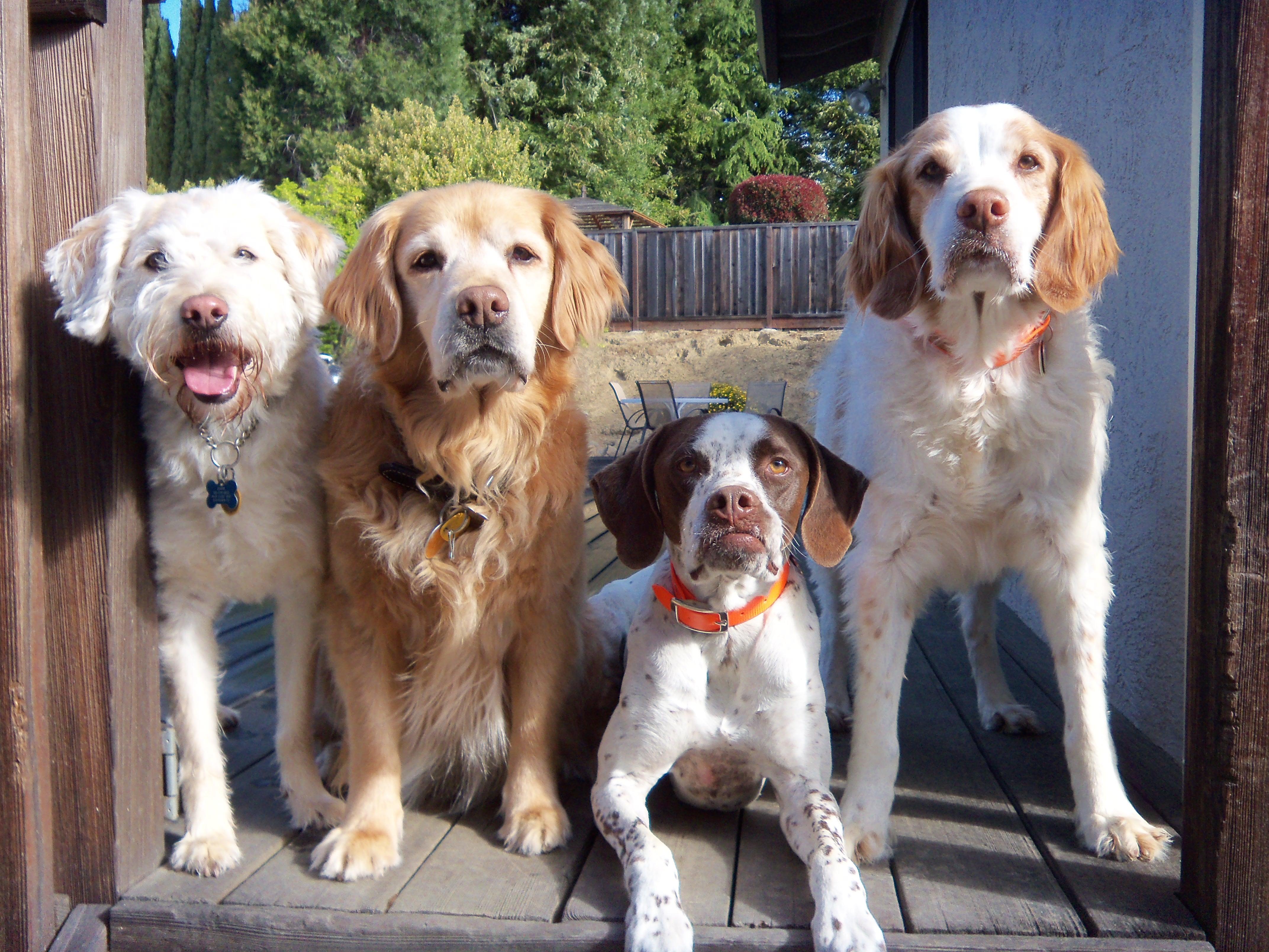 dog-walking-4-group-2