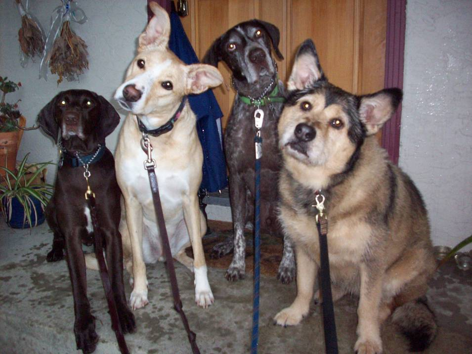 dog-walking-group-1