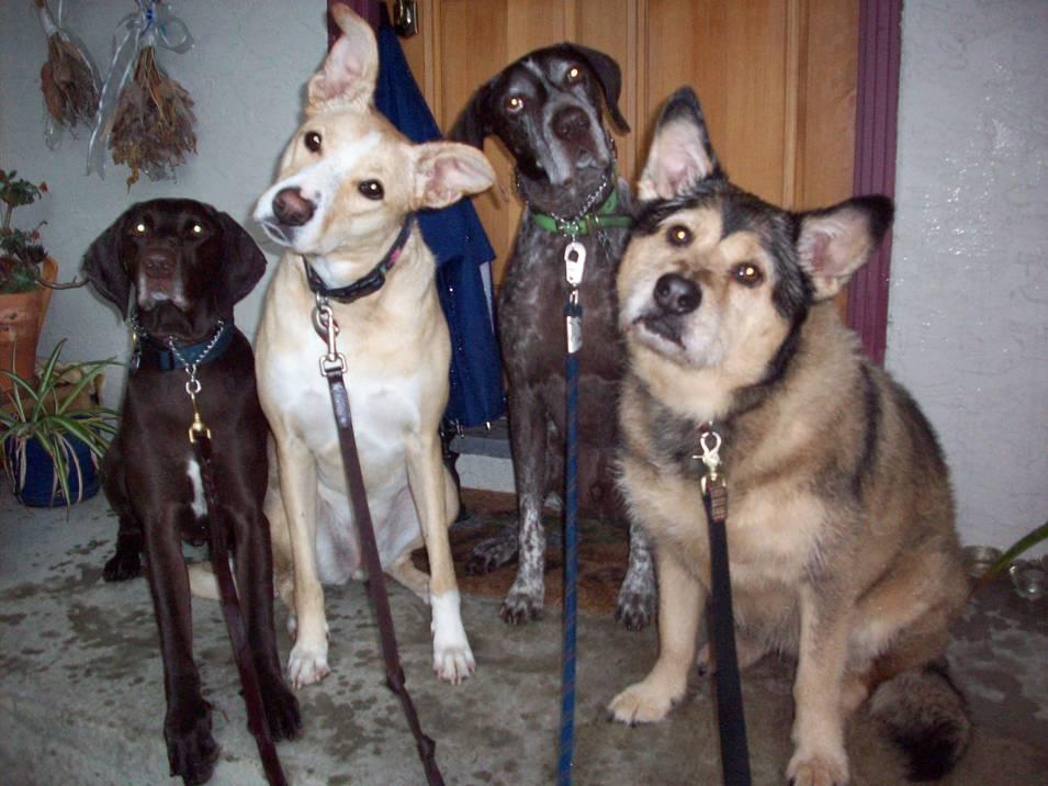 dog-walking-group-1