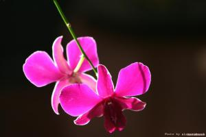 orchid-175889_1280