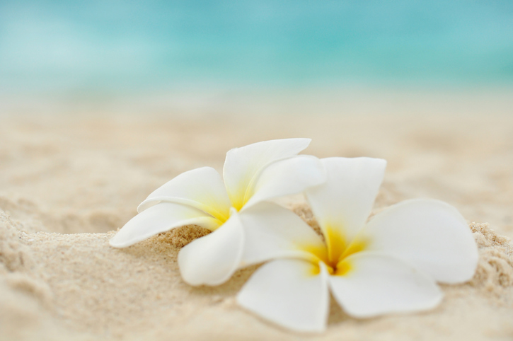 two flowers on the beach