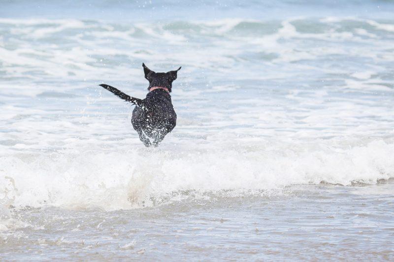Dog at the ocean