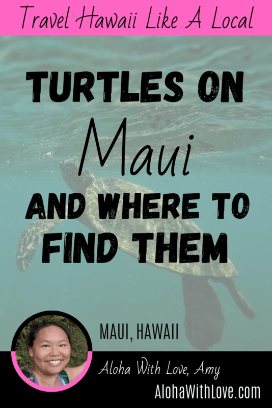 Turtles On Maui And Where To Find Them