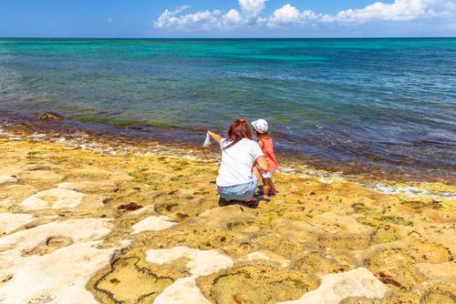 A Mom points out a turtle to her child at Laniakea Beach. Editorial credit: Benny Marty / Shutterstock.com