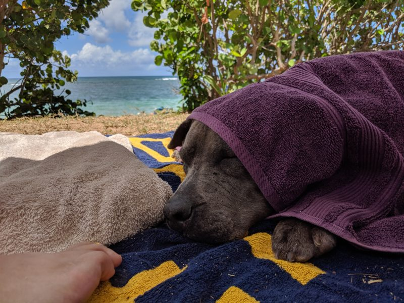 Daisy at Aweoweo Beach Park.