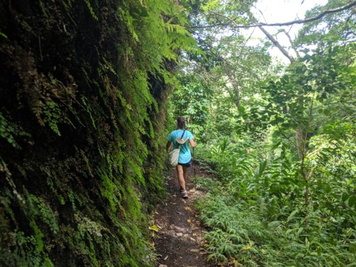 A wall of green on the Kalawahine Trail.