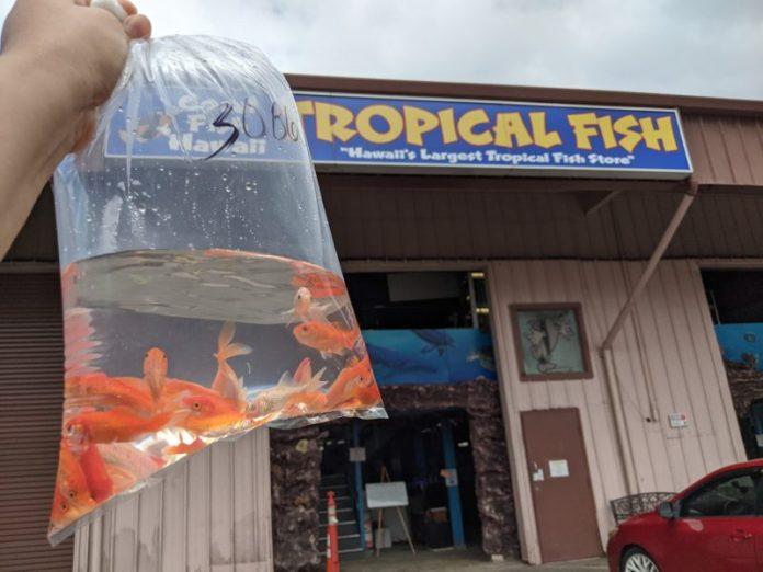 Shopping at Coral Fish Hawaii.