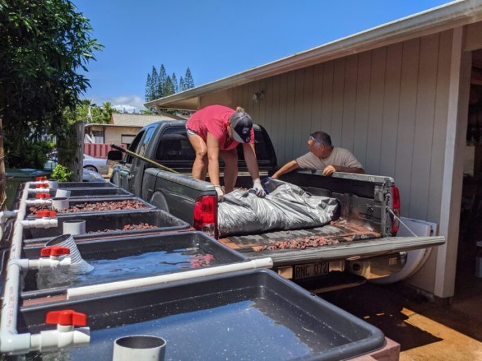 Using the tarp to gather the lava rock.