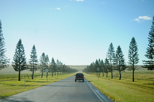 Driving around Lanai on a day trip.