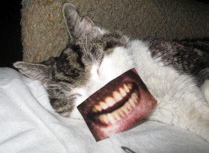 Sparky with teeth