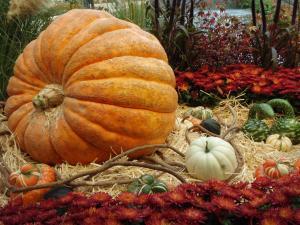 Festivals of various kinds have always been popular