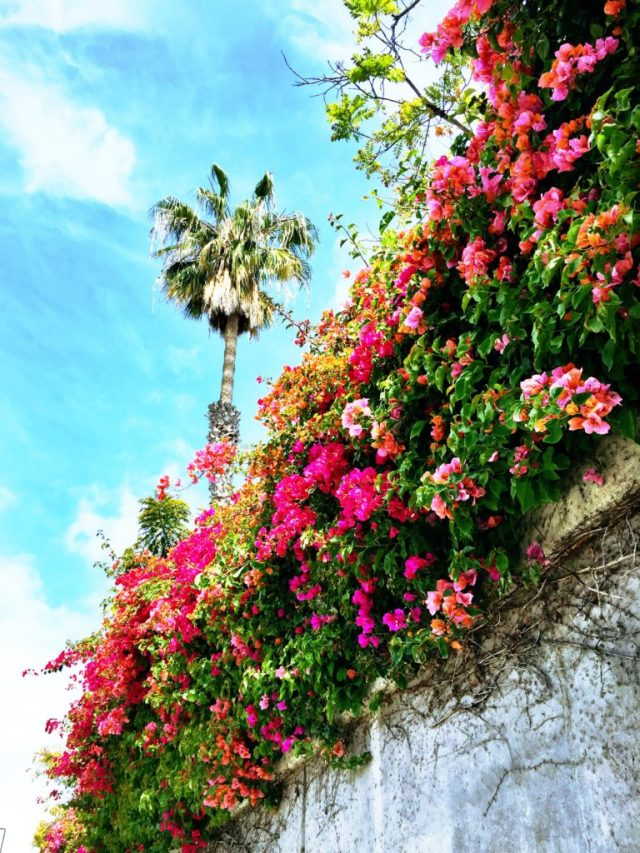 The American Riviera: Santa Barbara travel guide via A Lo Profile