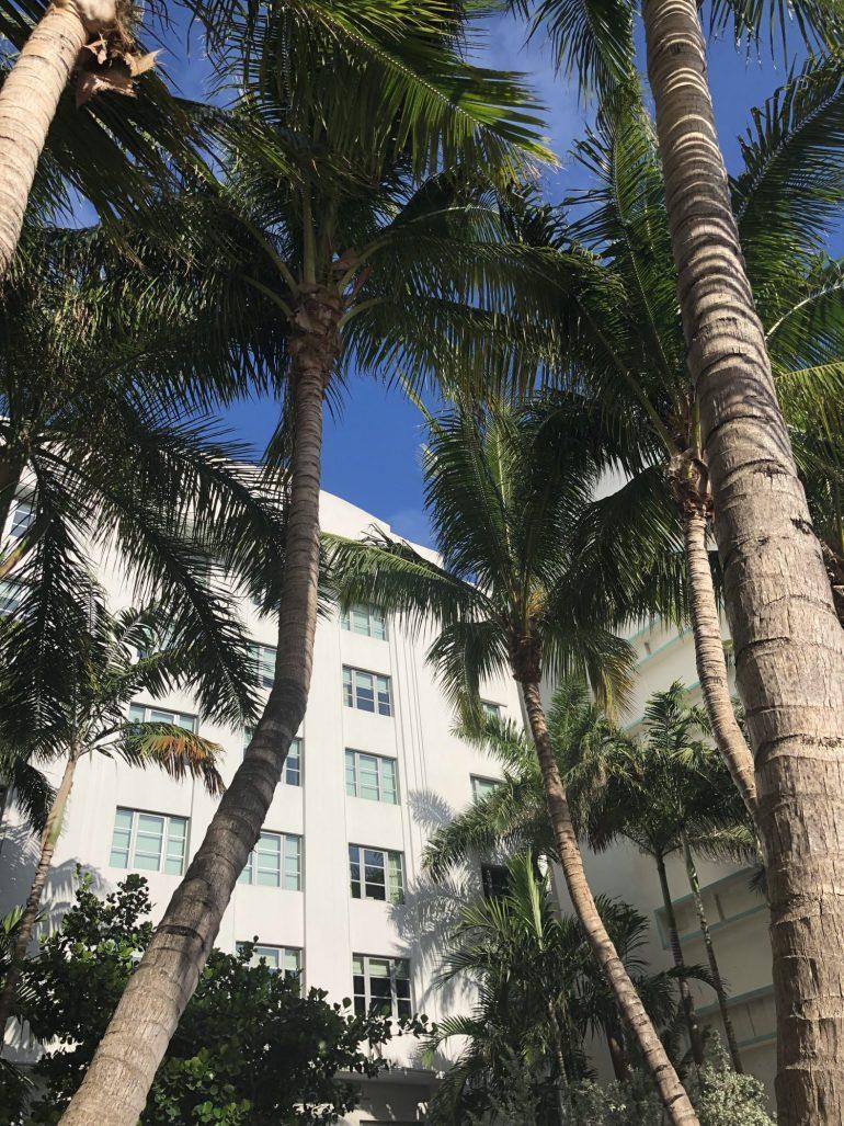 Palms in Miami